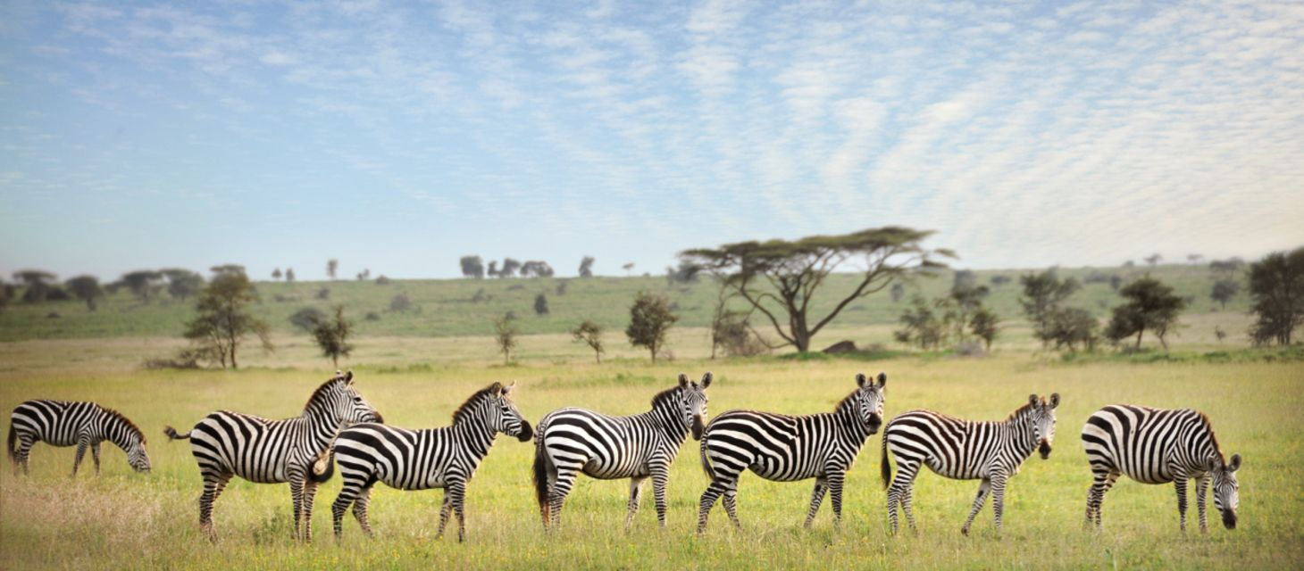 /destinations/africa/tanzania/Tanzania Overview