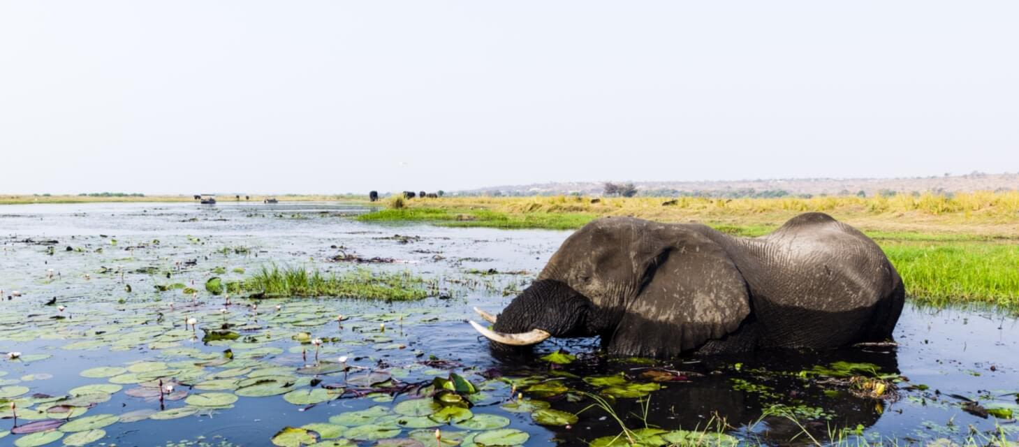 /destinations/africa/botswana/Botswana Overview
