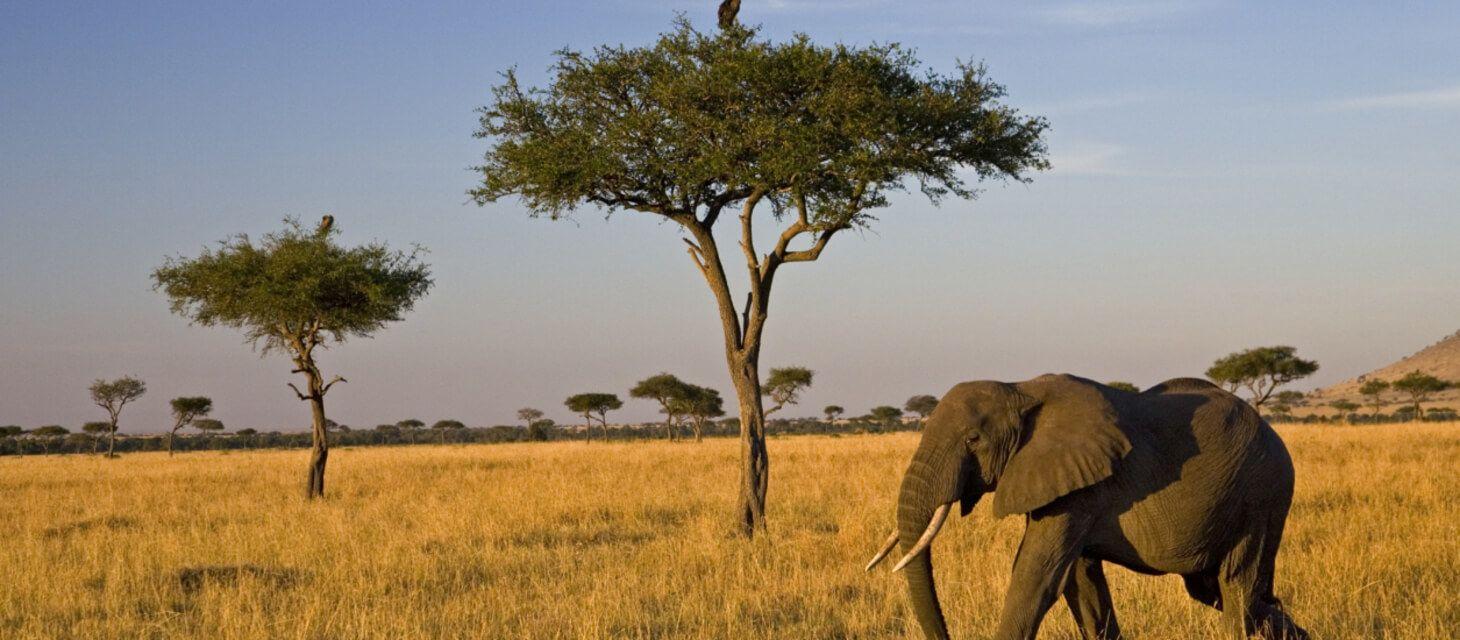 /destinations/africa/kenya/group-tours/Group tours index