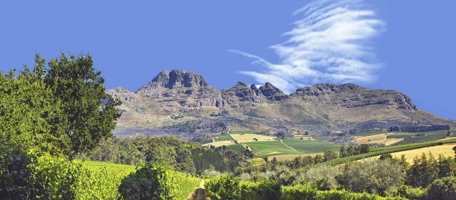 Cape Winelands & Whale Route