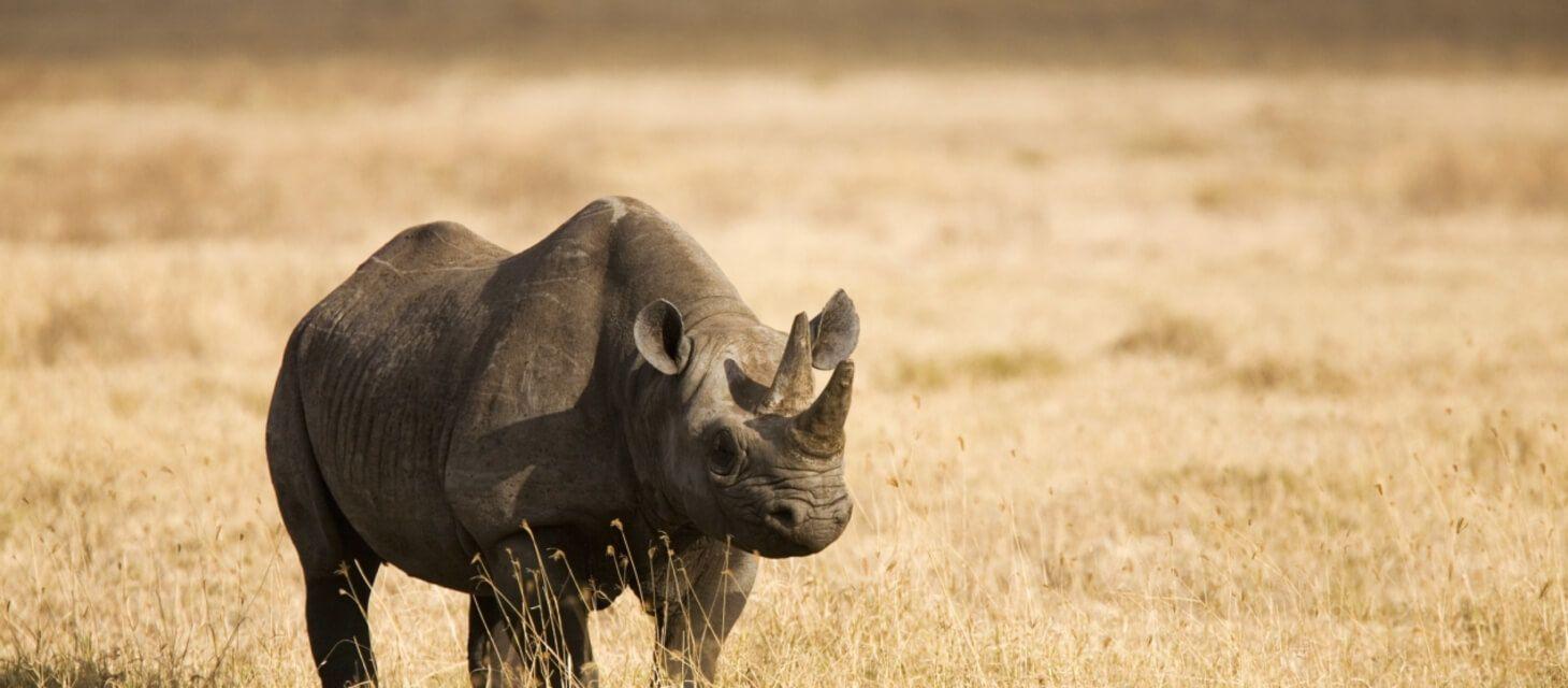 Timeless Kenya - Private Travel
