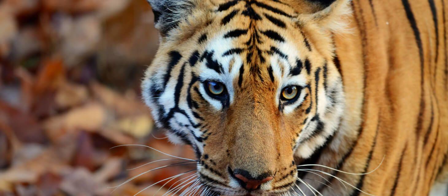 Maharashtra Wild Trail