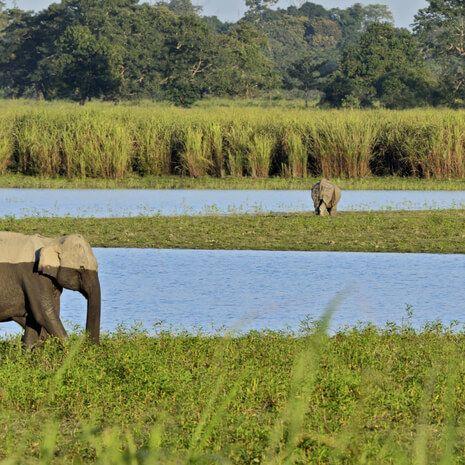 Discover Assam