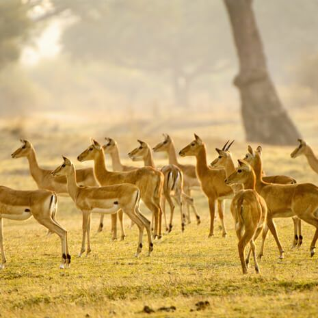 Zambia: The South Luangwa Valley