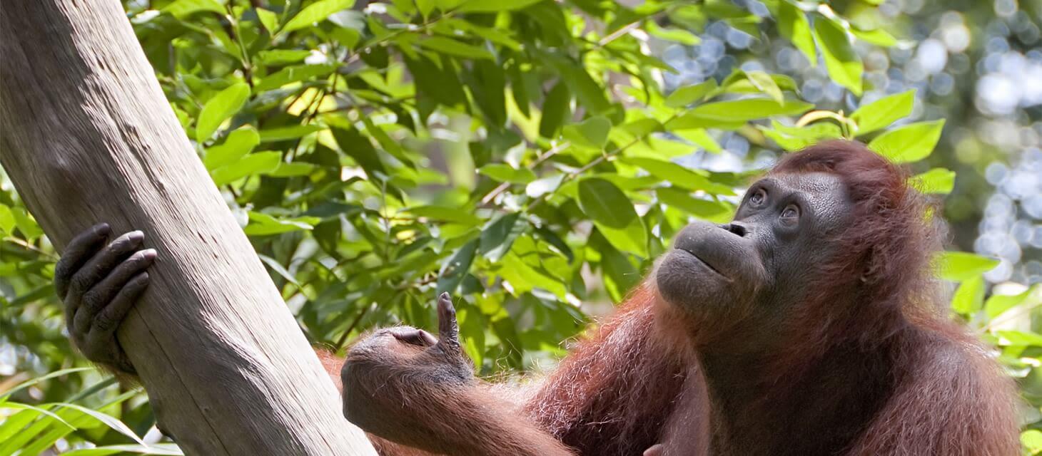 Splendours of Borneo - Private Travel