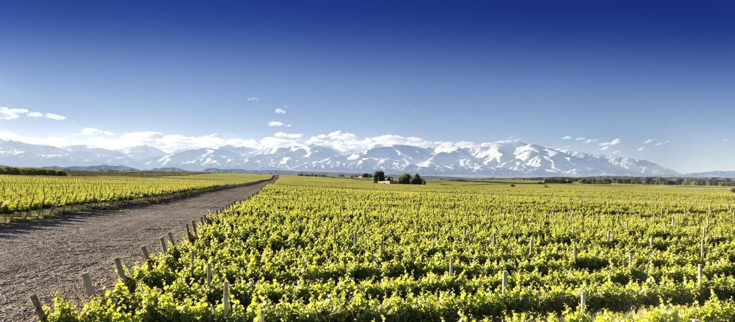 Mendoza & Winelands