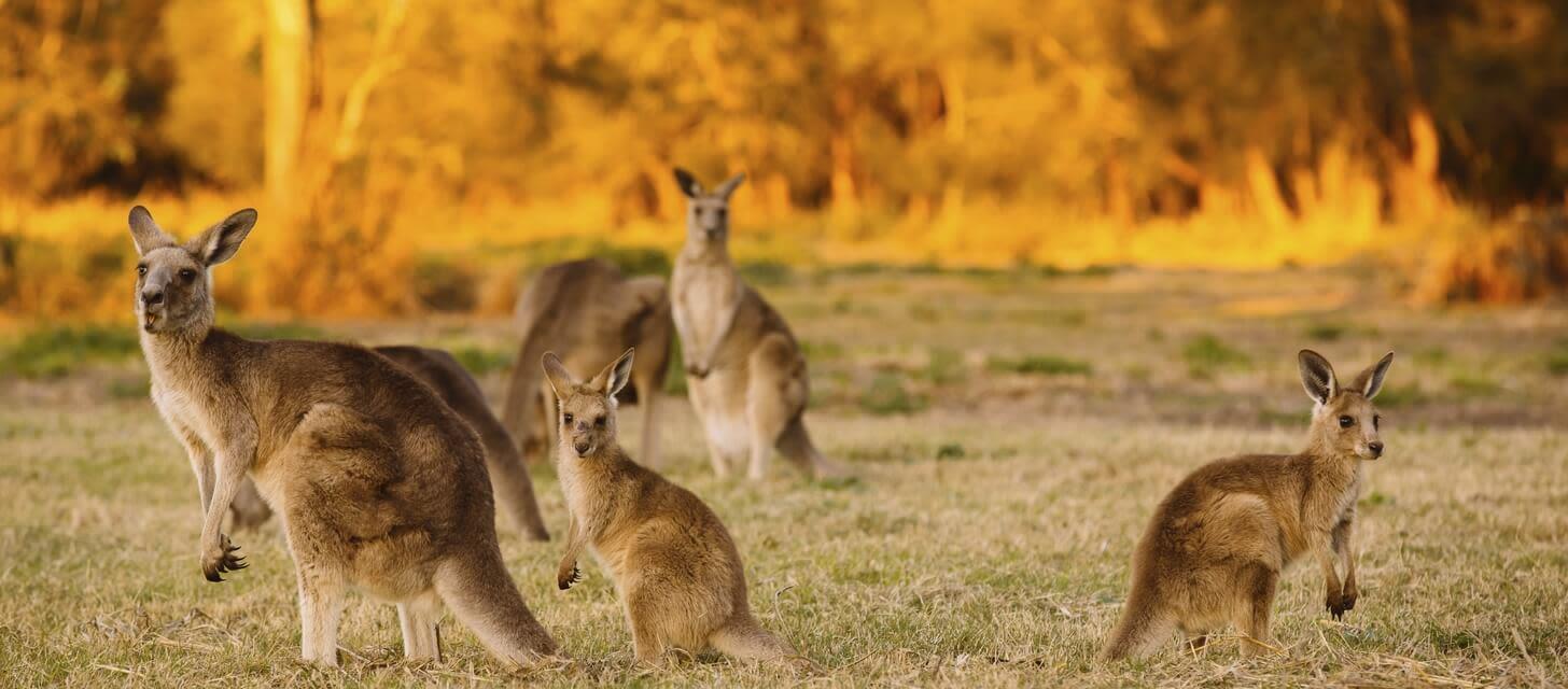 Australasia Pacific