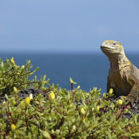 Ecuador & Galapagos Experience