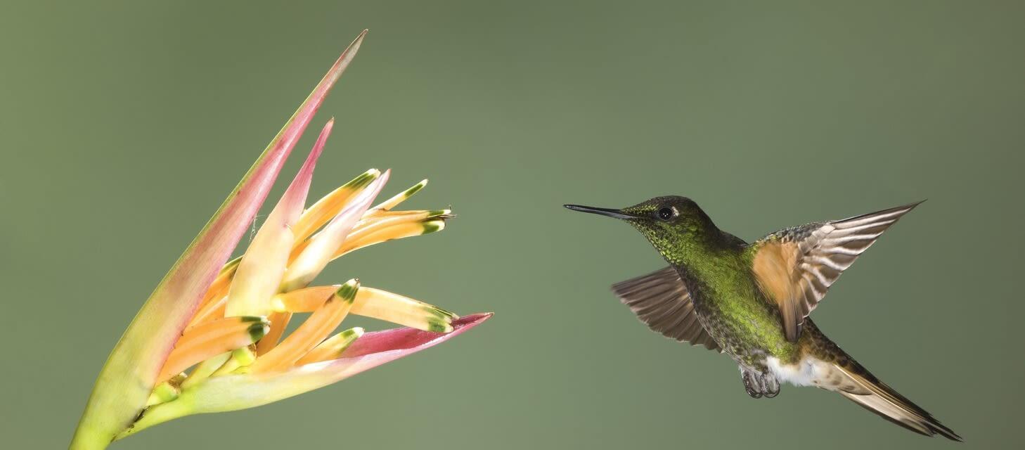 Cloudforest: Mindo & Mashpi, Ecuador & the Galapagos