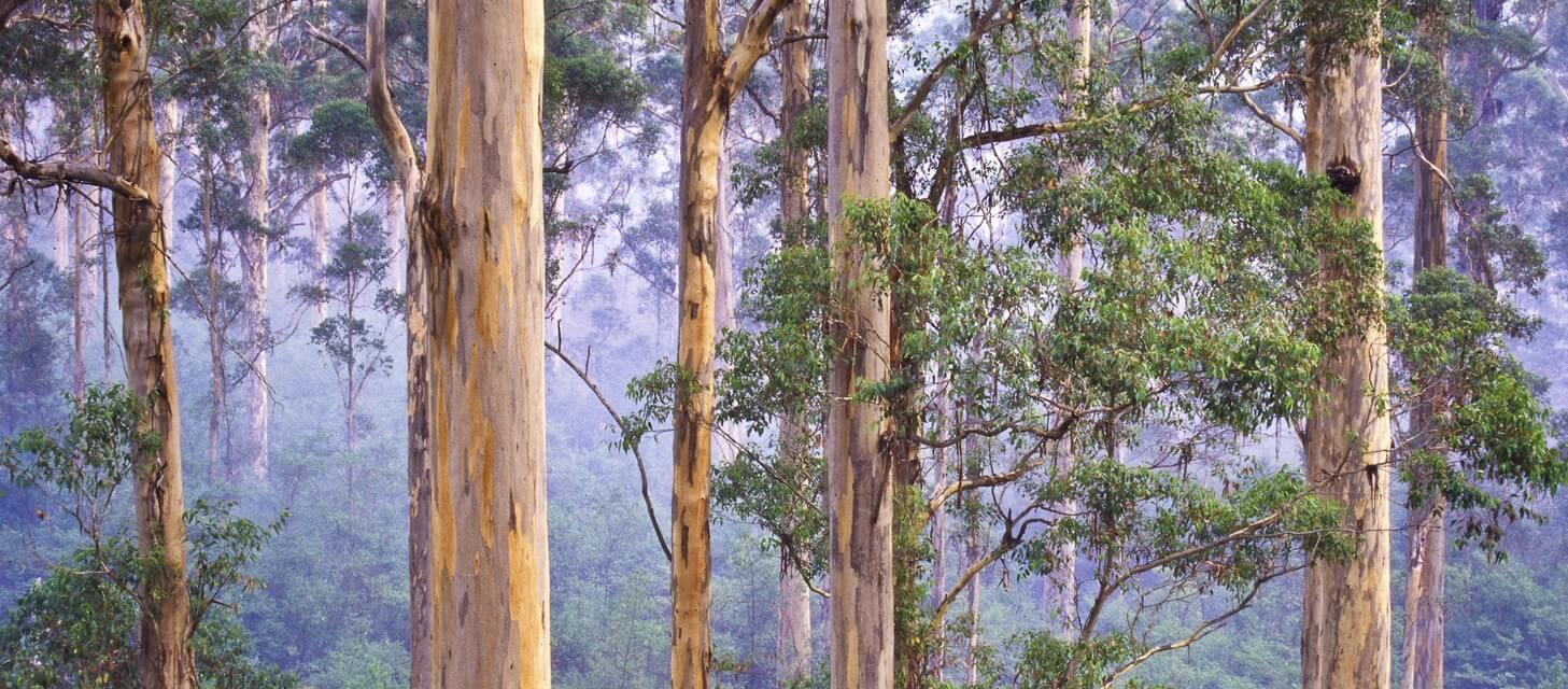 Pemberton, Australia