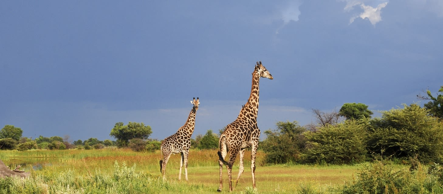 January Botswana