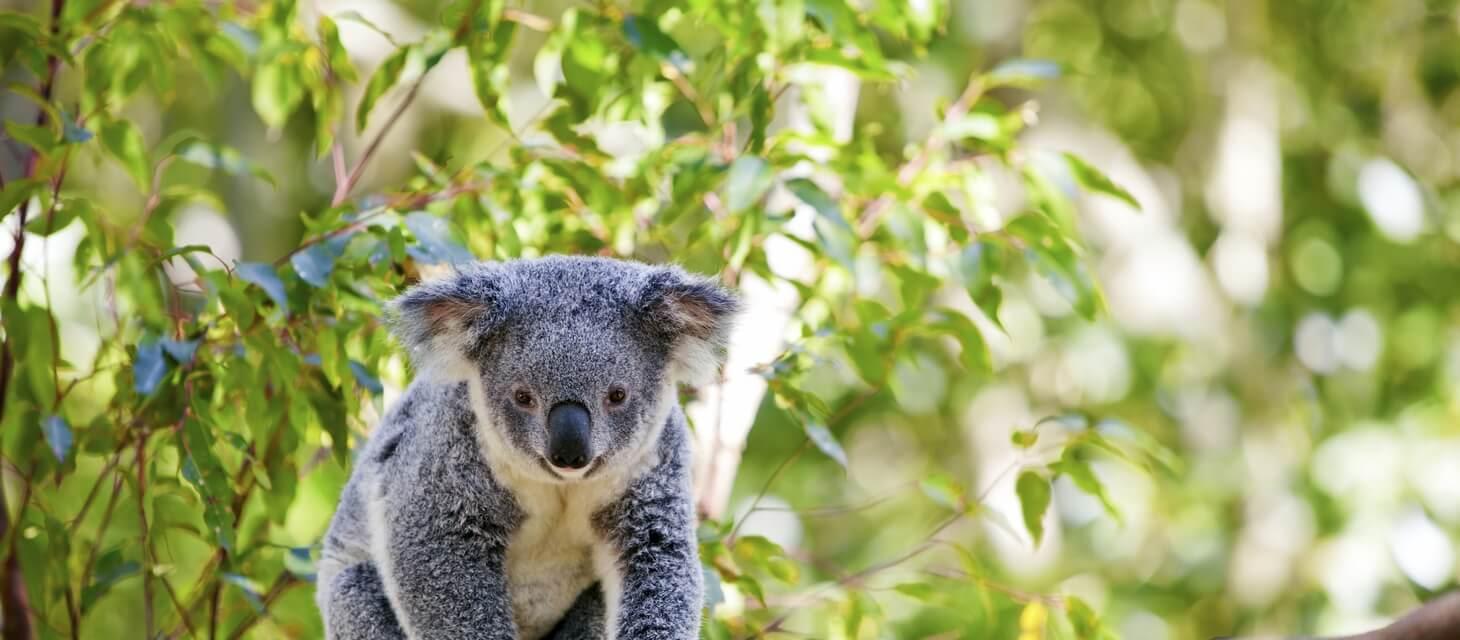/destinations/australasia-pacific/australia