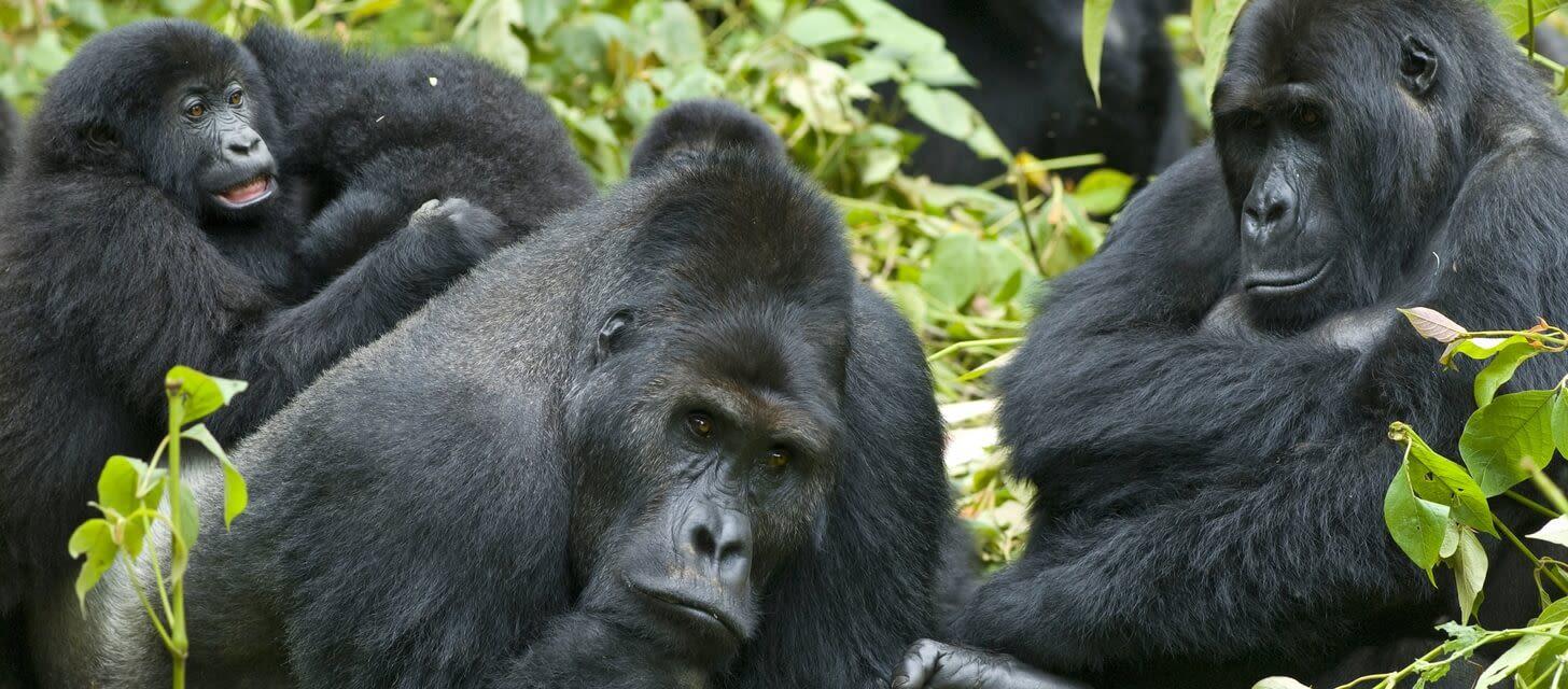/month-by-month Rwanda