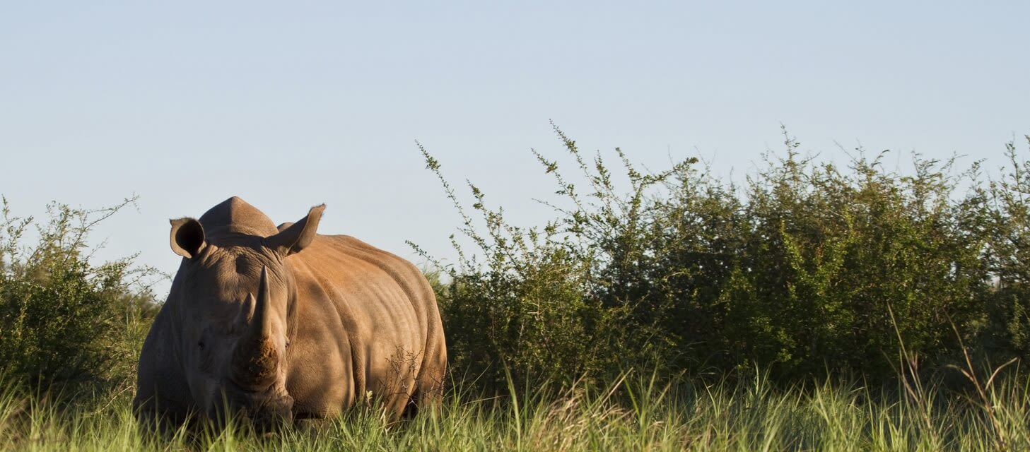 South African Safari - Private Travel