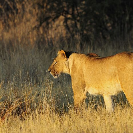 Zimbabwe's Wild Side - Private Travel
