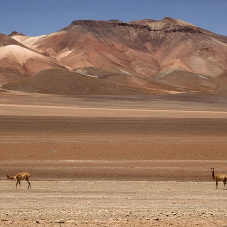 Bolivia Explorer - Private Travel