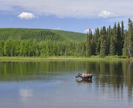 Fairbanks, United States Of America