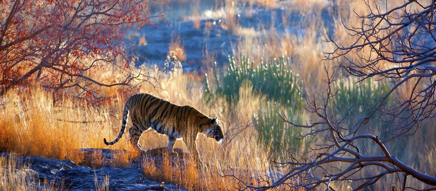 The Jungle Book: Wildlife of India