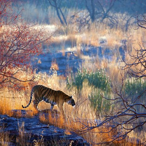 The Jungle Book: Wildlife of India