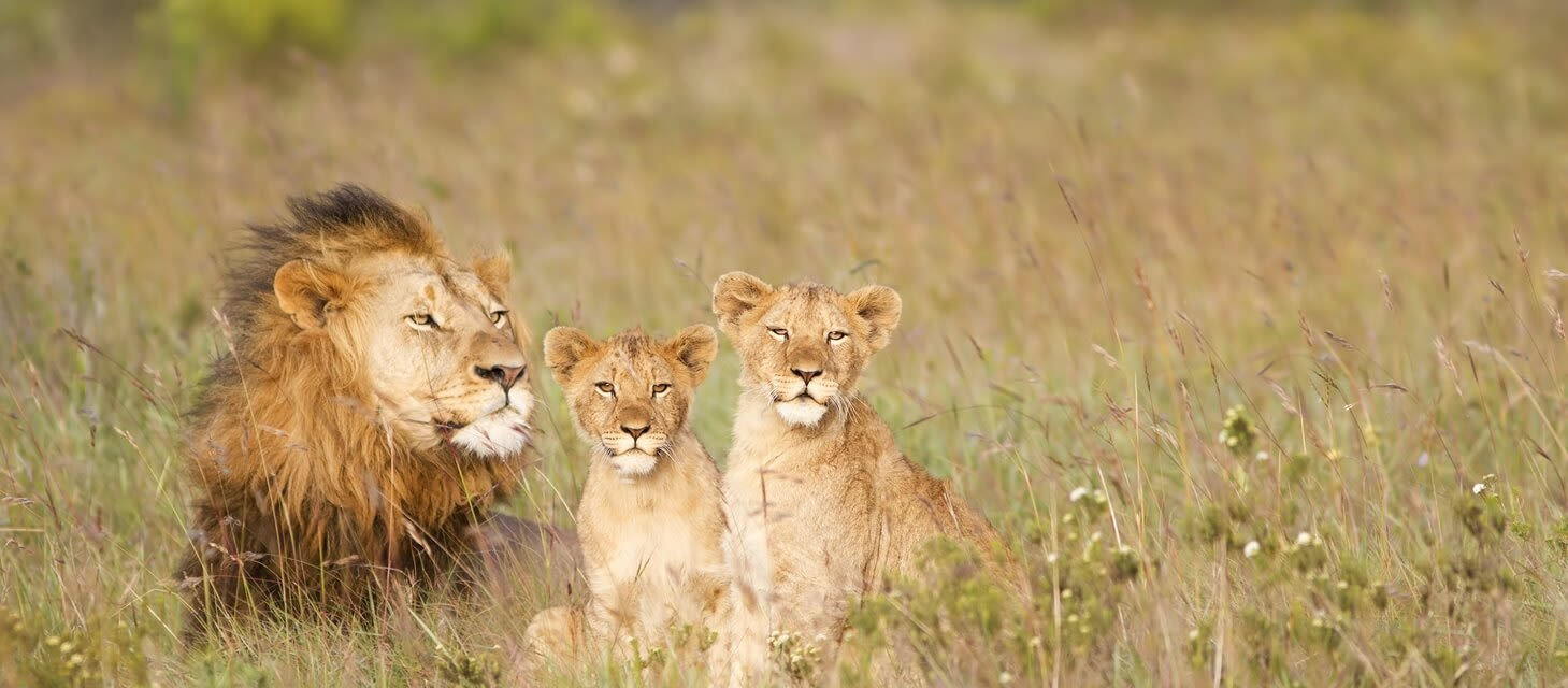 South Africa: Cape to Kruger - Non-Exclusive Group Tour
