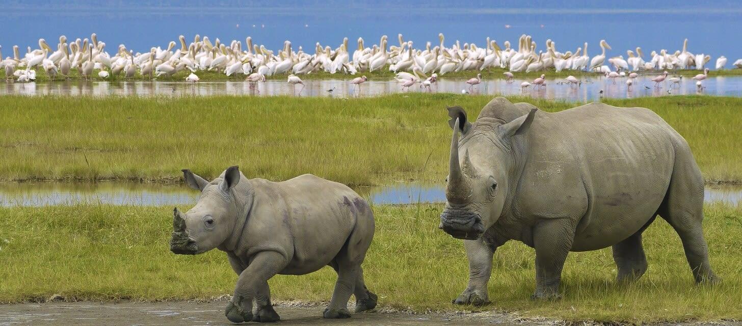 Tanzania - rhinos