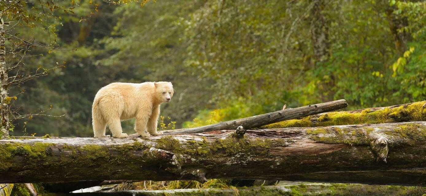 Spirit Bear Lodge, Canada