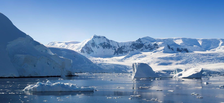 Narwhal and Polar Bear Safari Arctic Kingdom