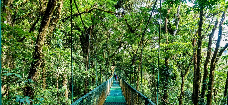 Canopy walkway, Monteverde