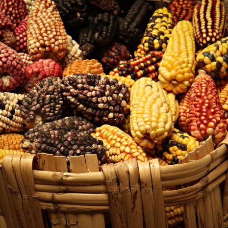 Peru: A Culinary Adventure