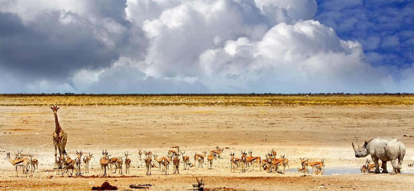 Namibian Watering Hole