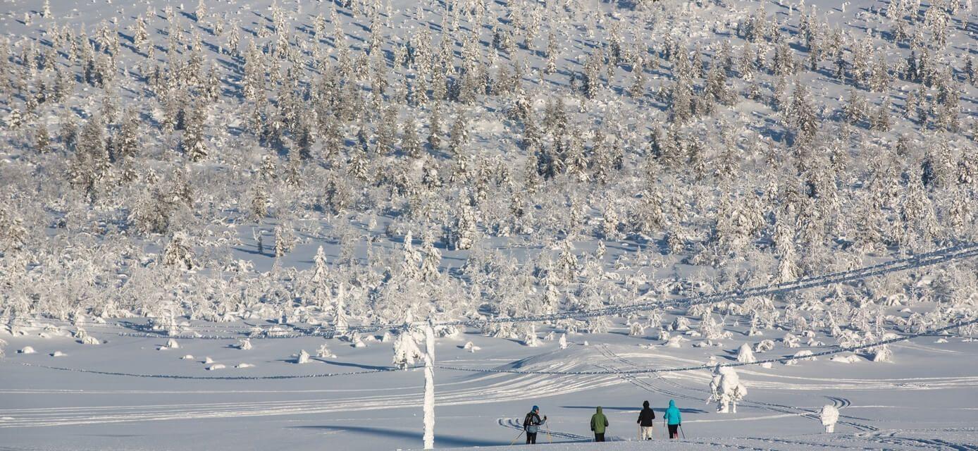 Finland Alpines