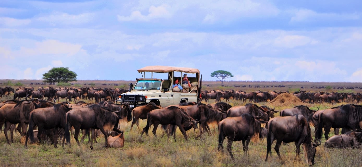 Ngorongoro camp migration