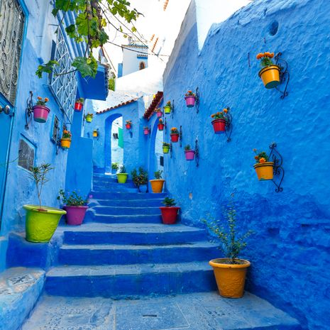 Blue street with colourful flower pots, Chefchaouen
