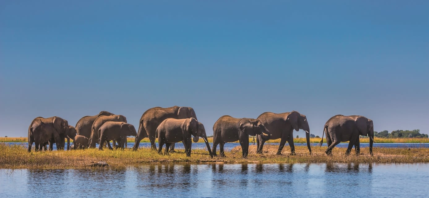 Elephant herd, Chobe National Park