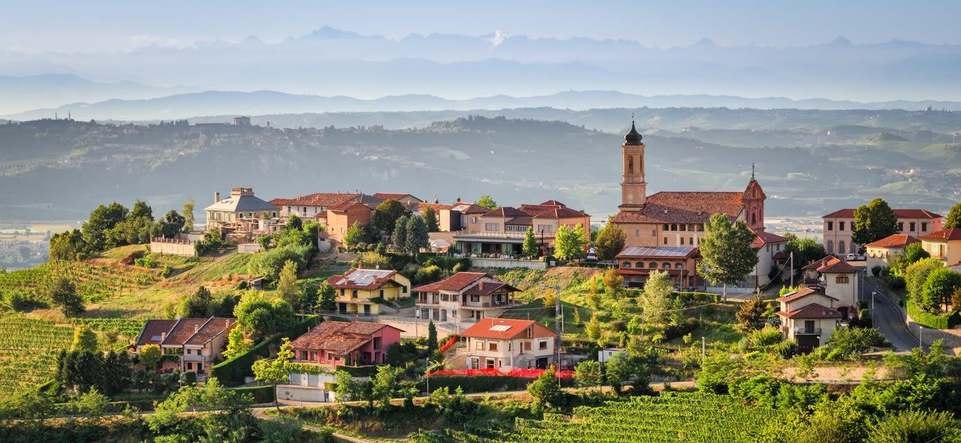 Vineyard, Treiso, Alba