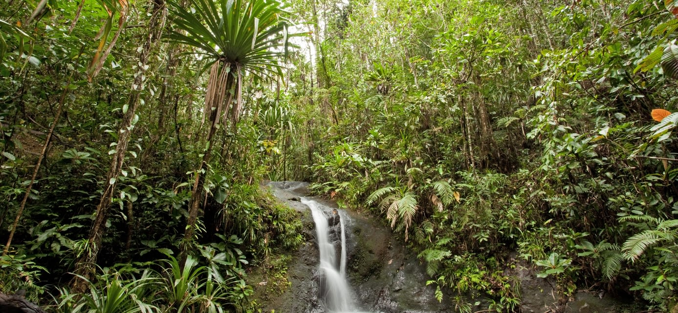 Suva National Park, Fiji