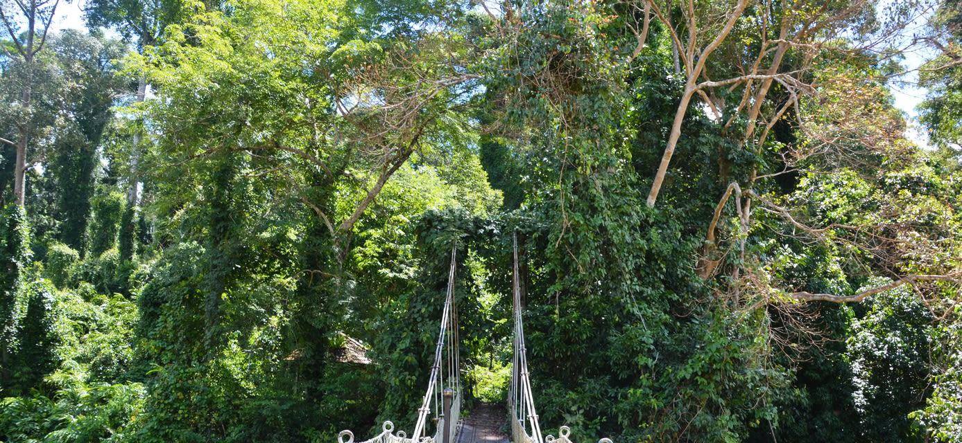 Suspension bridge in Borneo Rainforest