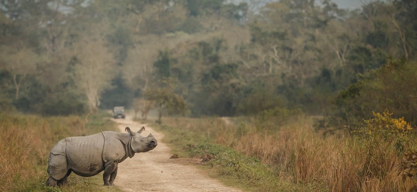 Rhino, India