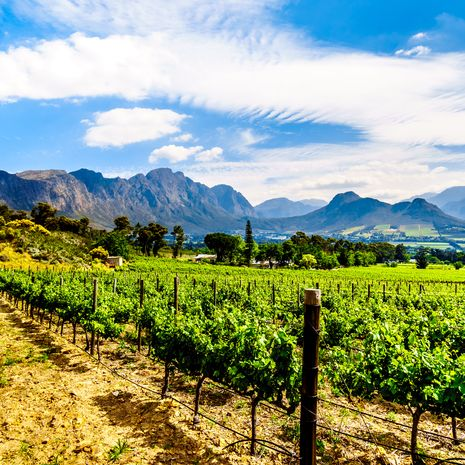Vineyards of the Cape Winelands, Franschhoek, Western Cape, South Africa