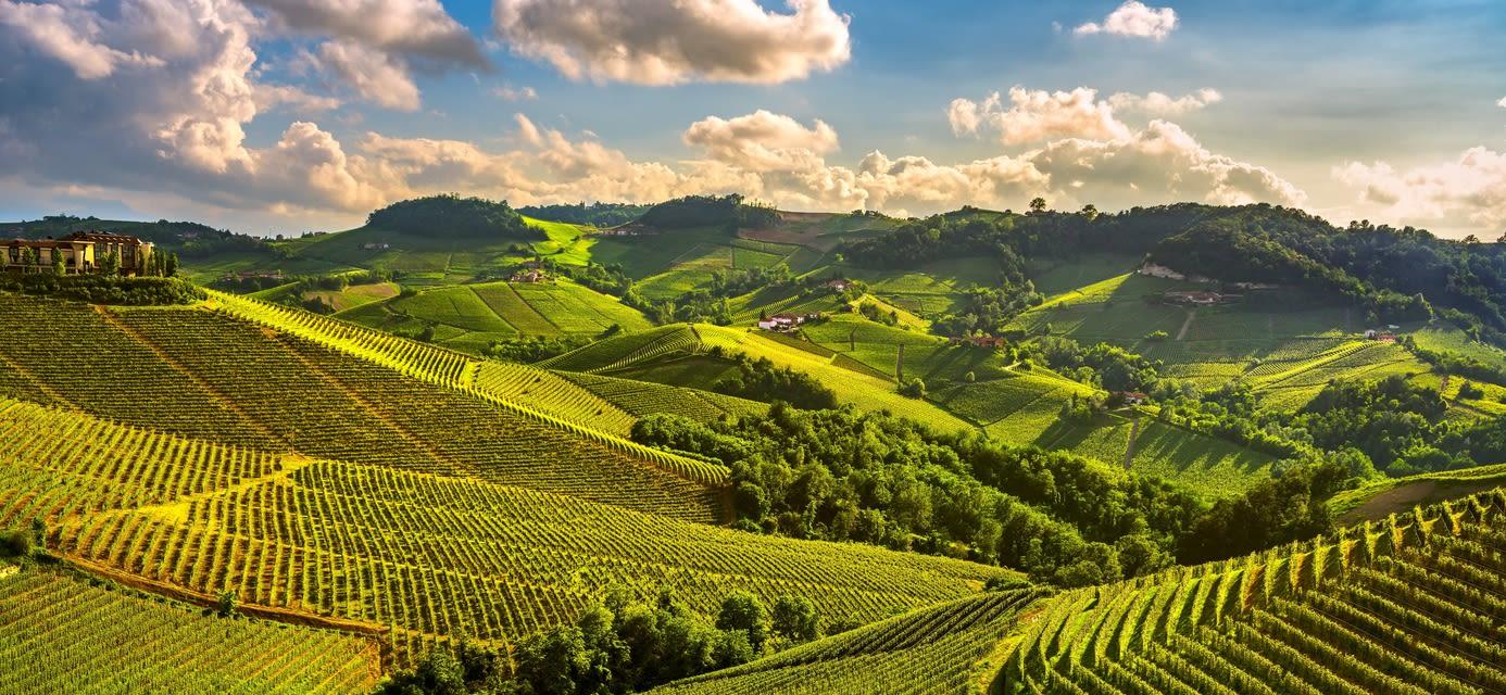 Langhe vineyards, Serralunga d Alba, Piedmont, Italy