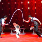 Watch Famous Dog Group Perform Tricks, Acrobatics At Ridgefield Playhouse