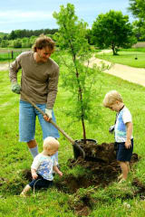 Plant a Tree For National Arbor Day, Westport