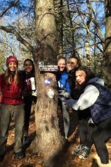 Westport Girl Scouts Make Trail, Restore Meadow At Leonard Schine Preserve