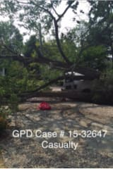 Contractor Seriously Injured By Falling Tree Sues Greenwich For Negligence