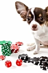 SPCA Hosting Casino Night In White Plains