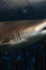 Teachers Can Go To 'Fish School' At Norwalk's Maritime Aquarium