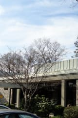 Mount Pleasant Library Cardholders Get Rosetta Stone, Consumer Reports