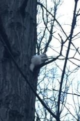 Rare White Squirrel Spotted In Trees At Norwalk's Flax Hill Park