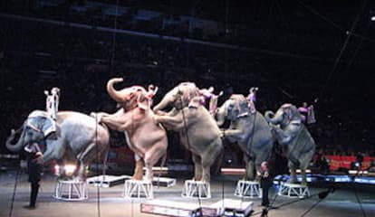 Elephants Take Final Bows With Ringling Bros. and Barnum & Bailey