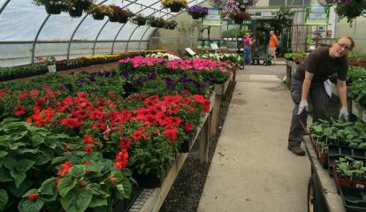 From Plump Tomatoes To Peanuts, Danbury Gardeners Get Adventurous